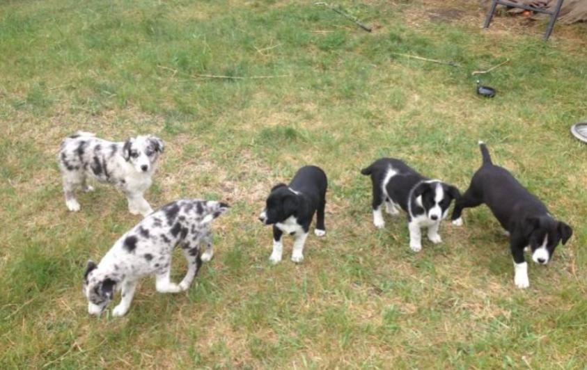 Name:  pup spud.jpg Views: 224 Size:  77.0 KB